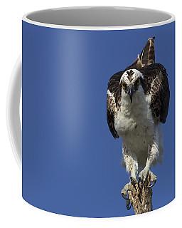 Osprey Photo Coffee Mug