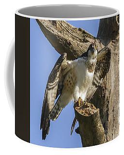 Osprey Pose Coffee Mug