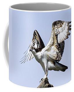 Osprey Pride 6 Coffee Mug
