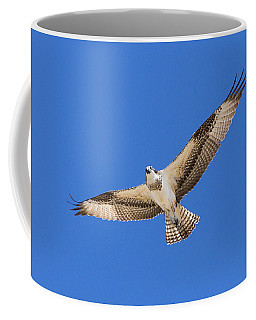 Osprey Stares During Flyover Coffee Mug