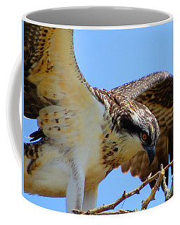 Coffee Mug featuring the photograph Osprey Youth by Dianne Cowen