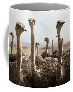 Ostrich Heads Coffee Mug