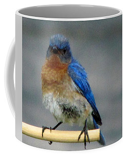 Our Own Mad Bluebird Coffee Mug by Betty Pieper