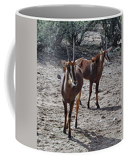 Out Of Africa B Coffee Mug