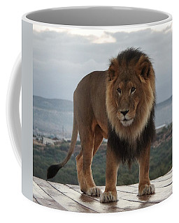 Out Of Africa Lion 3 Coffee Mug