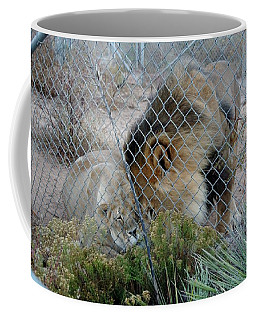Out Of Africa Lions 4 Coffee Mug