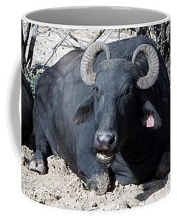 Out Of Africa  Water Buffalo Coffee Mug
