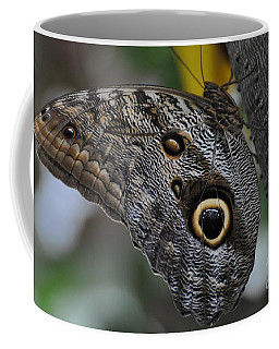 Coffee Mug featuring the photograph Owl Butterfly by Bianca Nadeau