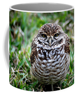 Owl. Best Photo Coffee Mug