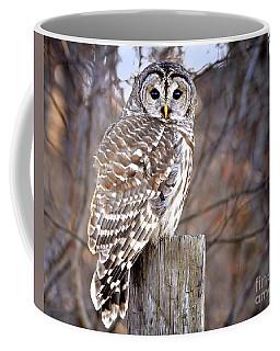 Owl On Fence Post Coffee Mug