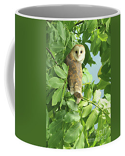 Coffee Mug featuring the photograph owl by Rod Wiens