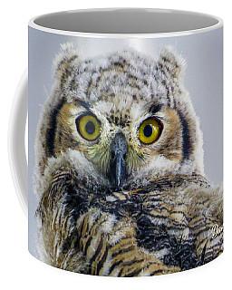 Owlet Close-up Coffee Mug