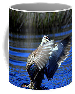 Coffee Mug featuring the photograph Pacific Black Duck by Miroslava Jurcik