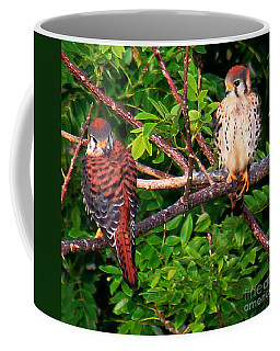 Coffee Mug featuring the photograph Caribbean Falcons by The Art of Alice Terrill