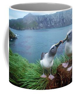 Pair Of Grey-headed Albatross Coffee Mug