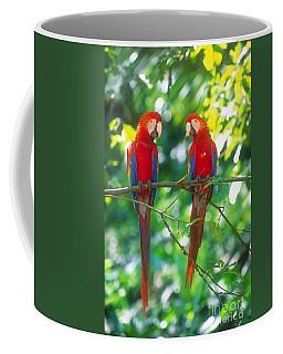 Pair Of Scarlet Macaws Coffee Mug