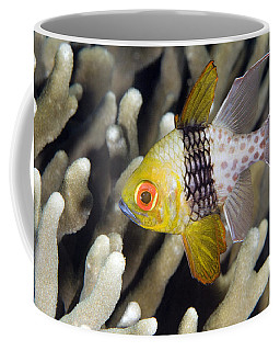 Pajama Cardinalfish Bali Indonesia Coffee Mug