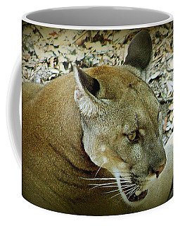 Coffee Mug featuring the photograph Panther by Debra Forand