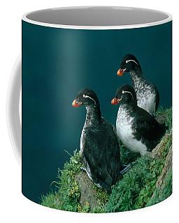 Parakeet Auklet Coffee Mug