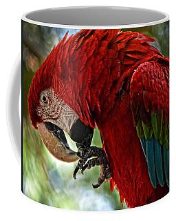 Parrot Preen Hdr Coffee Mug