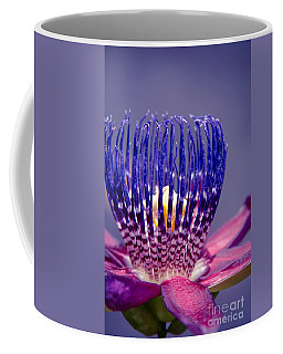 Passiflora Alata - Ruby Star - Ouvaca - Fragrant Granadilla -  Winged-stem Passion Flower Coffee Mug