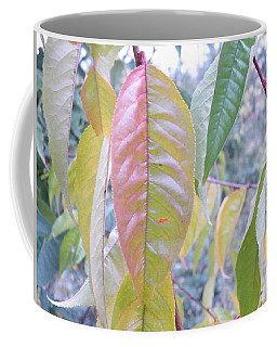 Coffee Mug featuring the photograph Pastel Symmetry  by Brian Boyle