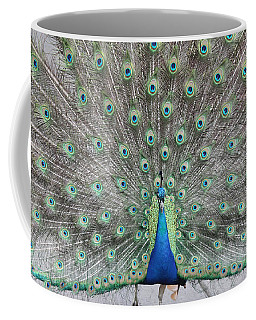 Coffee Mug featuring the photograph Peacock by John Telfer