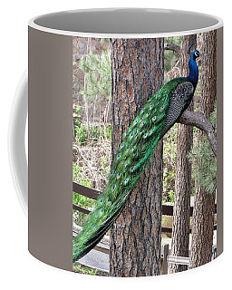 Coffee Mug featuring the photograph Peacock Watches The World by Diane Alexander