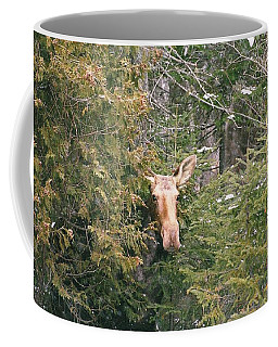 Coffee Mug featuring the photograph Peek-a-boo by David Porteus