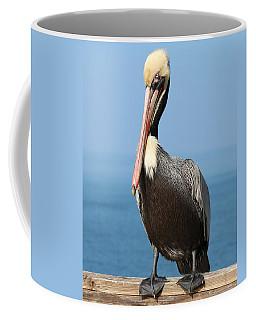 Pelican - 3  Coffee Mug