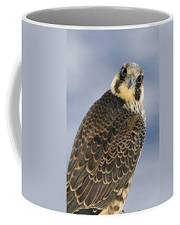 Peregrine Falcon Looking At You Coffee Mug
