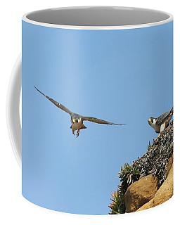Peregrine Falcons - 1 Coffee Mug