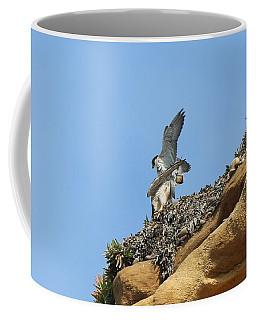 Peregrine Falcons - 3 Coffee Mug