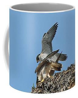 Peregrine Falcons - 4 Coffee Mug
