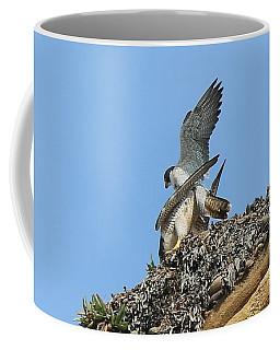 Peregrine Falcons - 5 Coffee Mug