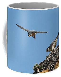 Peregrine Falcons - 6  Coffee Mug