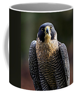 Coffee Mug featuring the photograph Peregrine Focus by Mary Jo Allen