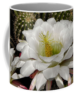 Coffee Mug featuring the photograph Petals And Thorns by Deb Halloran