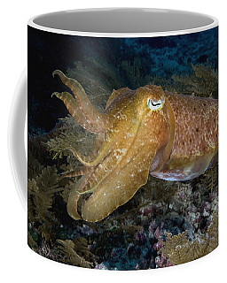 Pharaoh Cuttlefish Lombok Indonesia Coffee Mug