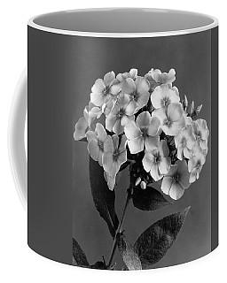 Phlox Blossoms Coffee Mug