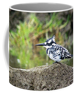 Pied Kingfisher Coffee Mug
