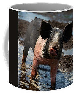 Coffee Mug featuring the photograph Pig In The Mud by Nick  Biemans