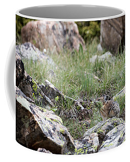 Coffee Mug featuring the photograph Pika  by Michael Chatt