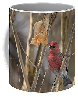 Coffee Mug featuring the photograph Pine Grosbeak by David Porteus