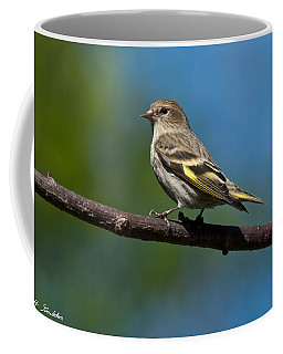 Pine Siskin Perched On A Branch Coffee Mug by Jeff Goulden