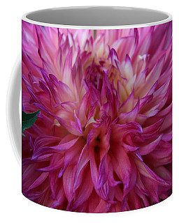 Coffee Mug featuring the photograph Pink And White Dahlia  by Denyse Duhaime