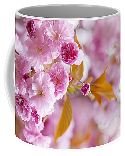 Coffee Mug featuring the photograph Pink Cherry Blossoms In Spring Orchard by Elena Elisseeva
