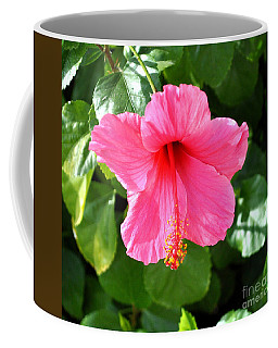 Pink Hibiscus With Large Stamen Coffee Mug by Jay Milo