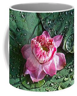 Pink Lotus Flower Coffee Mug by Venetia Featherstone-Witty
