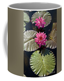 Pink Water Lily IIi Coffee Mug